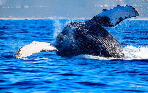 Cabo_Whale_RAD_190214_psd_1142.jpg