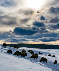 190109_Yellowstone_RAD_7698.jpg