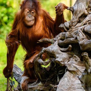 Zoo-180307-Lesson2_RAD_86734.jpg
