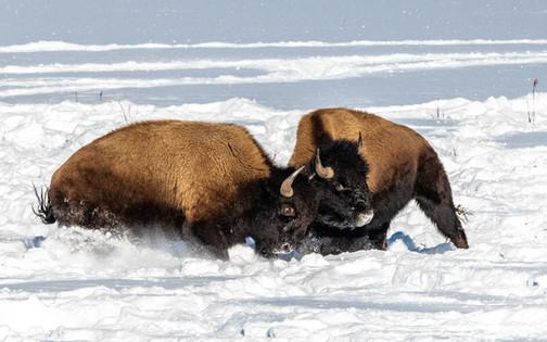 190108_Yellowstone_RAD_6956.jpg