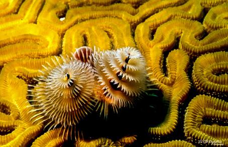 wildlife_RADykstra_1200-__199906170001.jpg