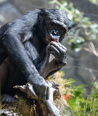 Zoo-180307-Lesson2_RAD_86773.jpg