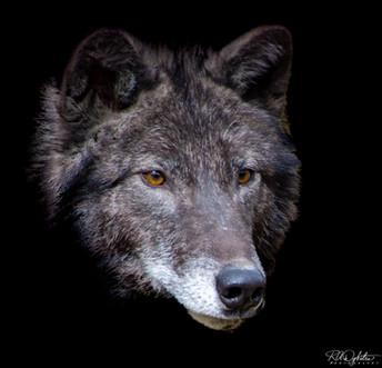 Wolves_RAD_4225-3.jpg