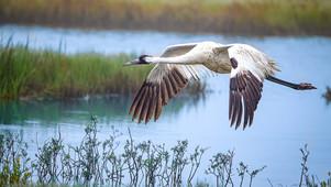 Texas Gulf Coast and a couple endangered birds