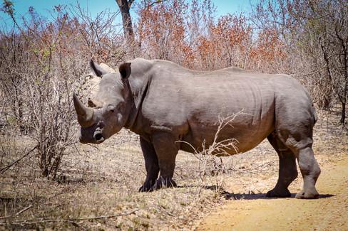 Rhino_RADykstra-2013-0001-4.jpg