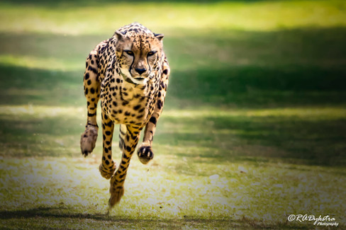 wildlife_RADykstra_1200-__201704270001 (2).jpg