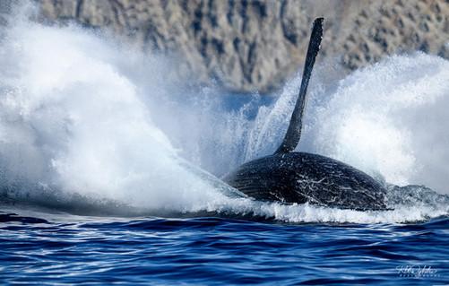 Cabo_Whale_RAD_190214_sm_1256.jpg