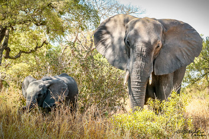 Elephant_RADykstra_400_20131003-0001-3.jpg