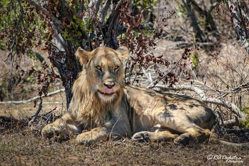 wildlife_RADykstra_1200-__201310030001-2.jpg