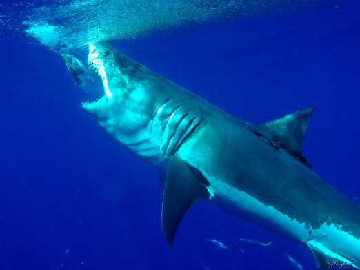 Sharks_RADykstra_article-15-9.jpg