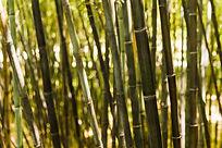 close-up-bamboo-stem.jpg
