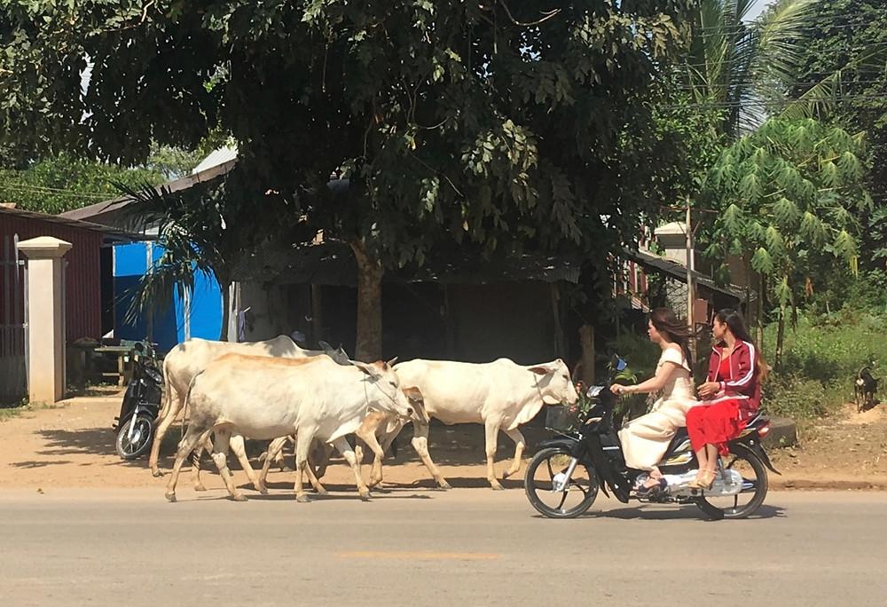 Tour du monde à vélo en famille 2018 - 2019 : route Cambodge