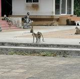Les singes de Khao Chakan