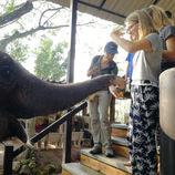Les éléphants de Pattaya