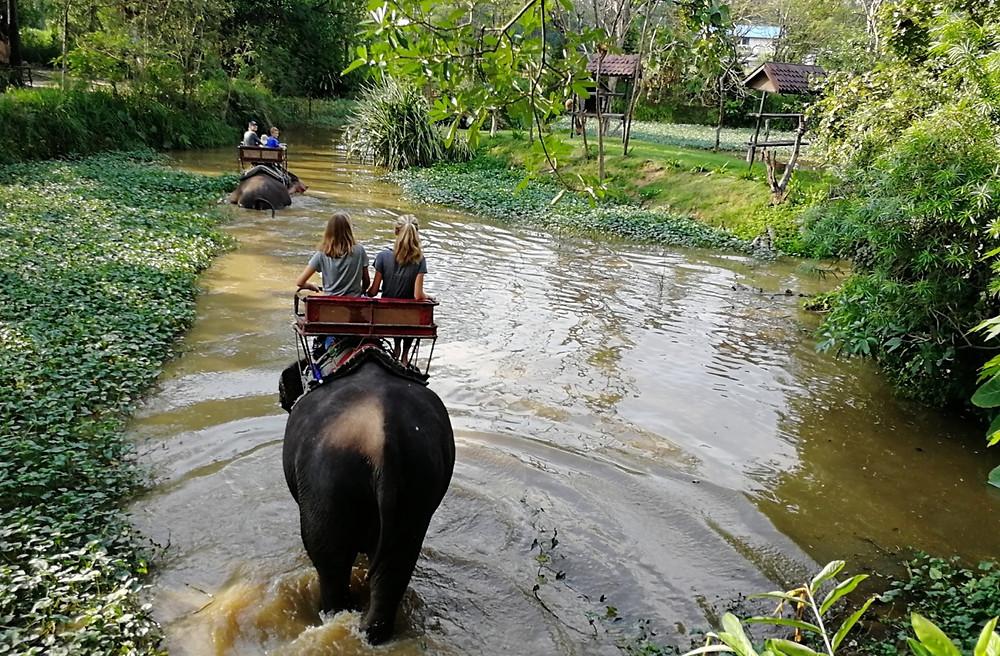 Tour du monde à vélo en famille : Elephants Thaïlande