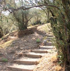 path to the beach 4jpg