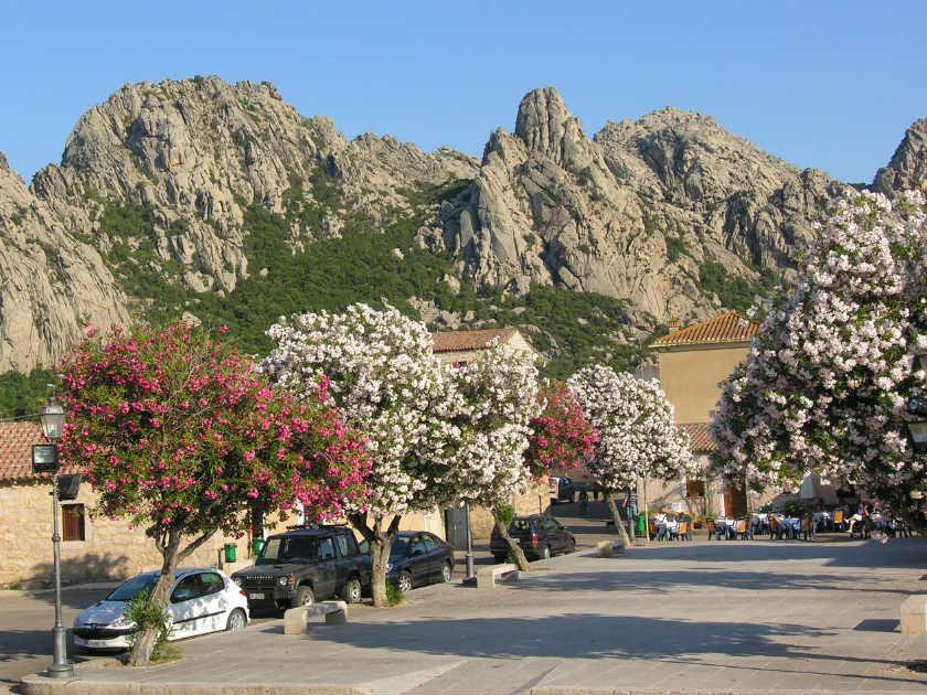 sardinia blossom