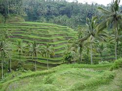 Bali-resized