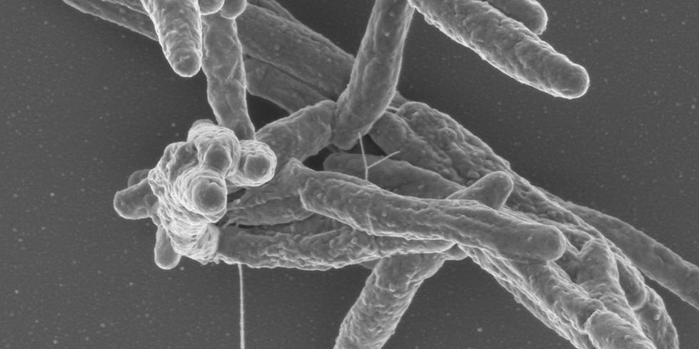 Talk on Microbacterial Tuberculosis