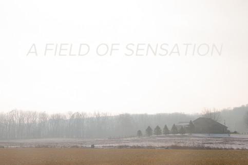 A Field of Sensation