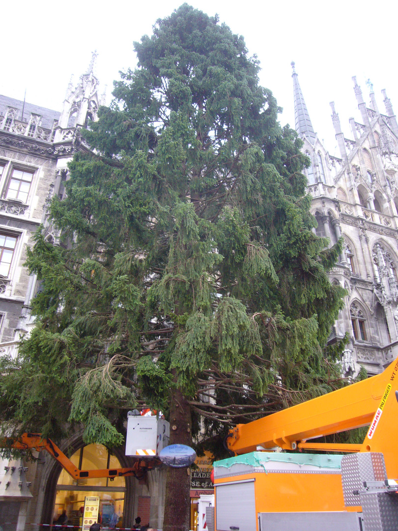 Christbaum am Marienplatz