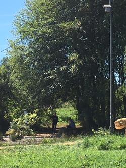 Moorschlange am Moorweiher