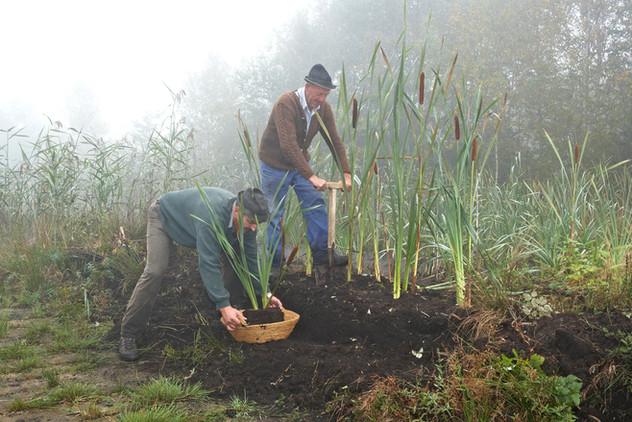 Dorfstich in Bad Kohlgrub mit Moorkolben