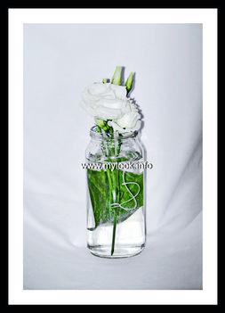 Цветы на белом