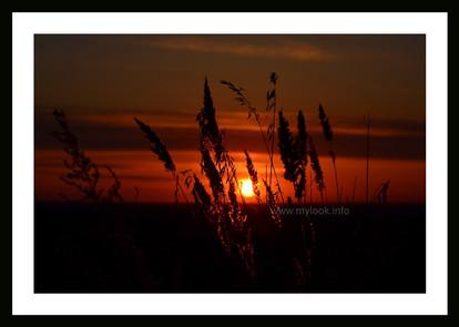 Закат в поле 2