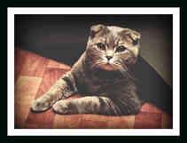 Котенок за делом