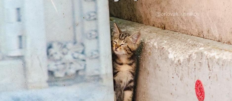 😉 Выживание в городских условиях 2. Котята