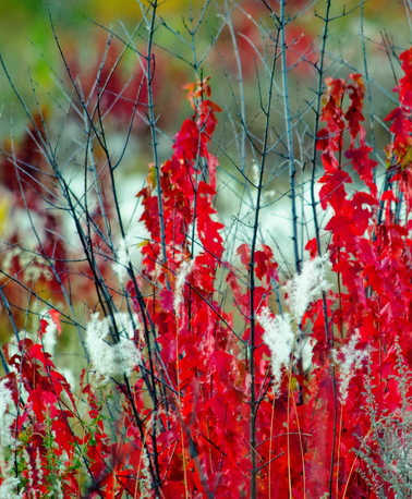 FAR EASTERN AUTUMN IN BRIGHT COLORS.jpg