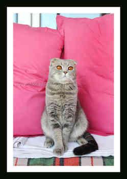 Котенок на красном