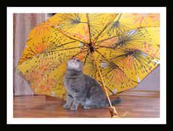 Котенок и зонт