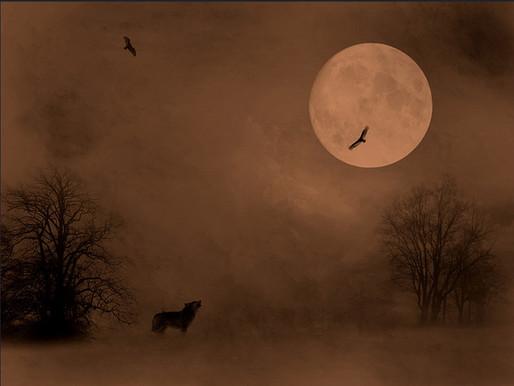 Волчонок так мечтал стать птицей