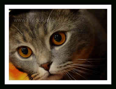 Котенок 3