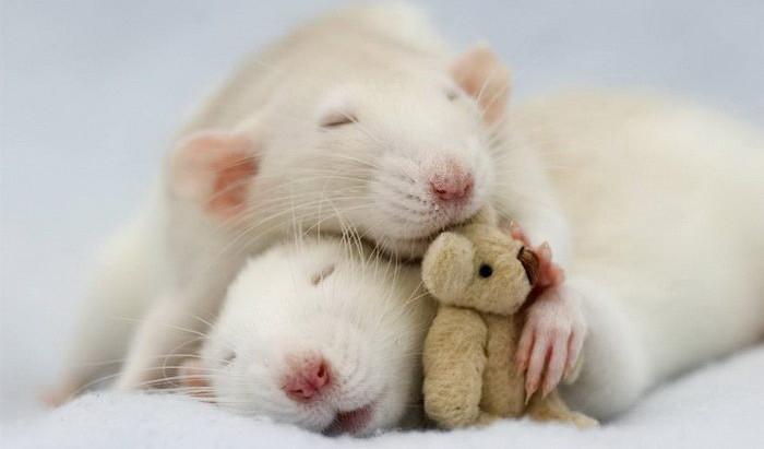 Сны – крыши - мыши