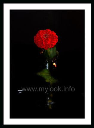 Цветок на черном