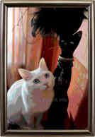 Белый кот и черная кошка