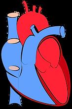 human-heart-1700453_1280.png