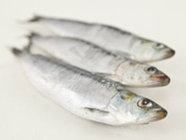 Sardines #2