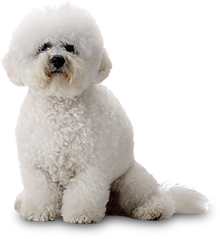 Rah Raw Rah Pet Foods bichon