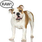 Carnivors love Rah Raw Rah Pet Foods
