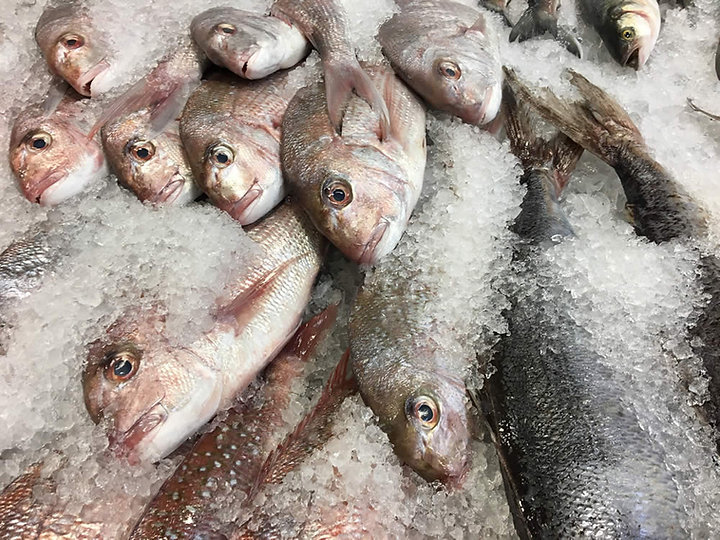 theos-fisheries-christchurch-wholesale-f