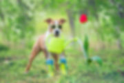 Funny dog with sunglasses and boots wate