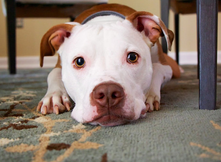 Got a new rescue pet? Here's what you need to know.