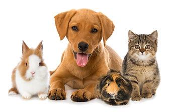 Group of pets.jpg