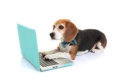 business concept smart pet dog using lap