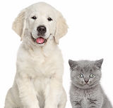 Cat And Dog Together_edited.jpg
