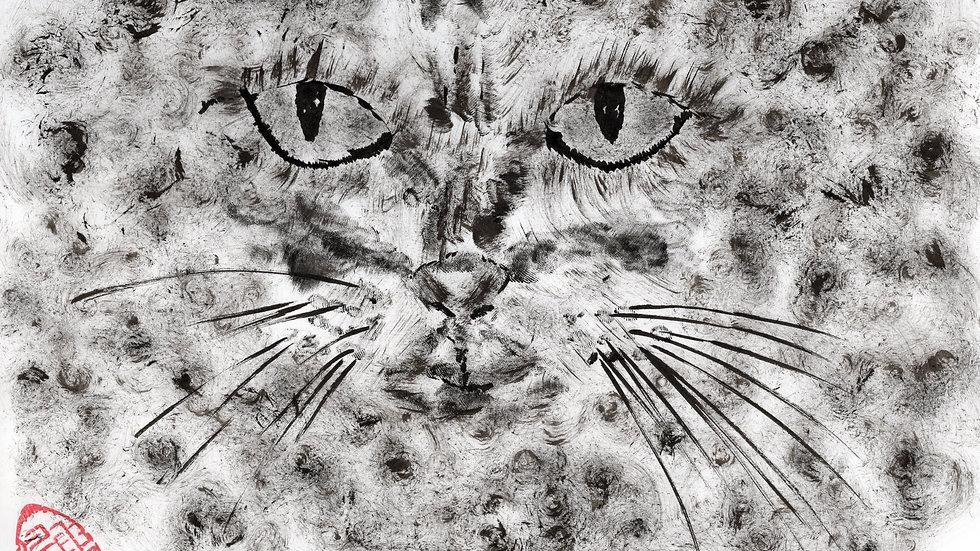 ベンガル猫の眼差し